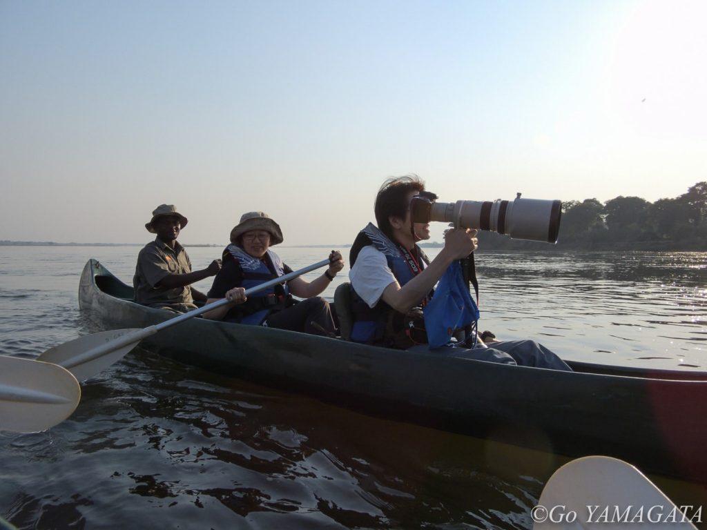 ロウワー・ザンベジではボートのみならず、カヌーサファリもできる。基本的にガイドが漕いでくれるが、自分で漕いでみたければそれも可能。