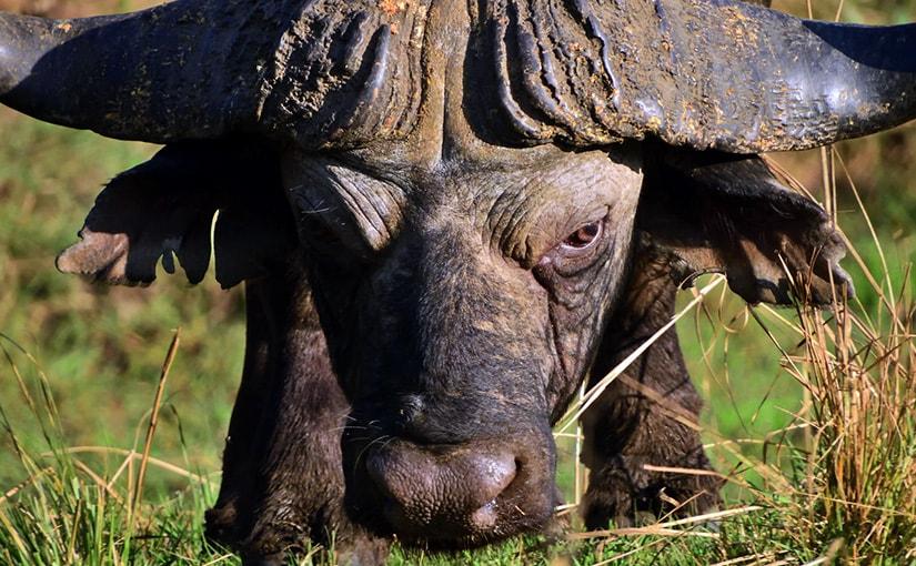 2017.8.17発 山形豪さんと行く ベストシーズンのザンビア 写真撮影ツアー 10日間
