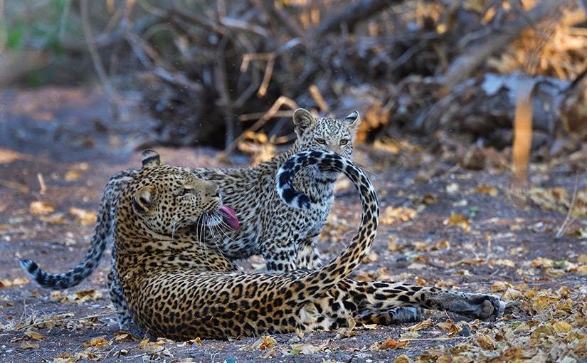 WILD AFRICA 35 動物写真とソーシャルメディア