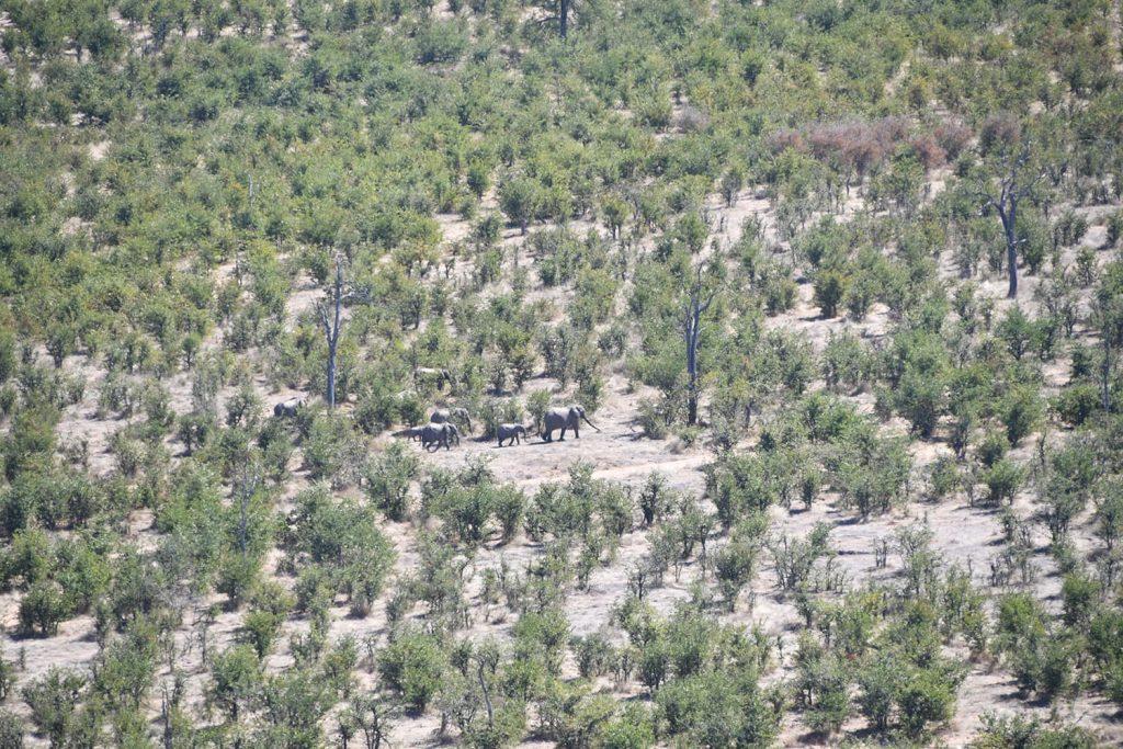 崖の上から、ゾウの群れが見られました