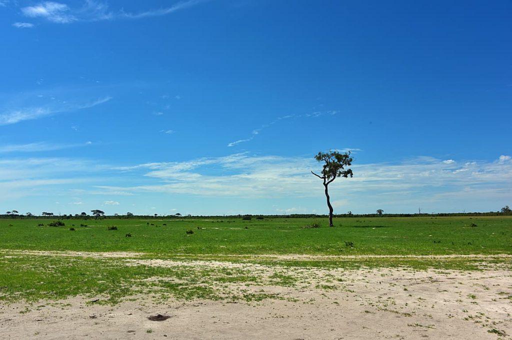 サブチマーシュの草原1