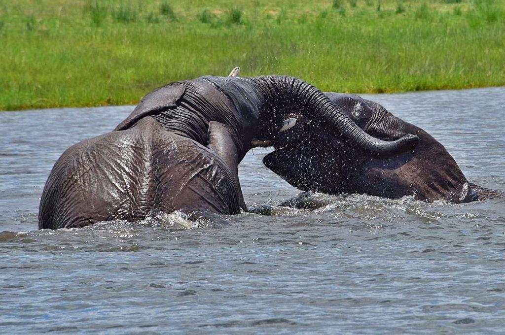 アフリカゾウの水浴び1