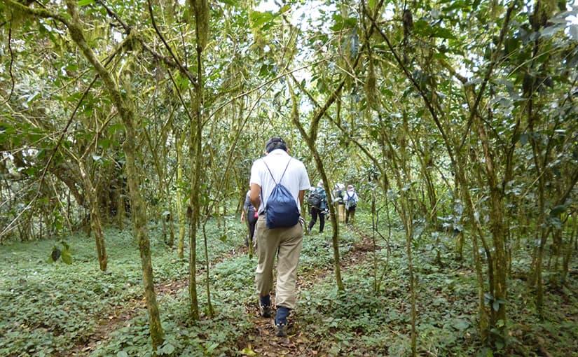2017.11.19発 エチオピア・コーヒー 原木の森を訪ねる 8日間