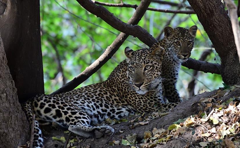 ザンビアへ ~サファリを楽しみ、滞在を楽しむ~