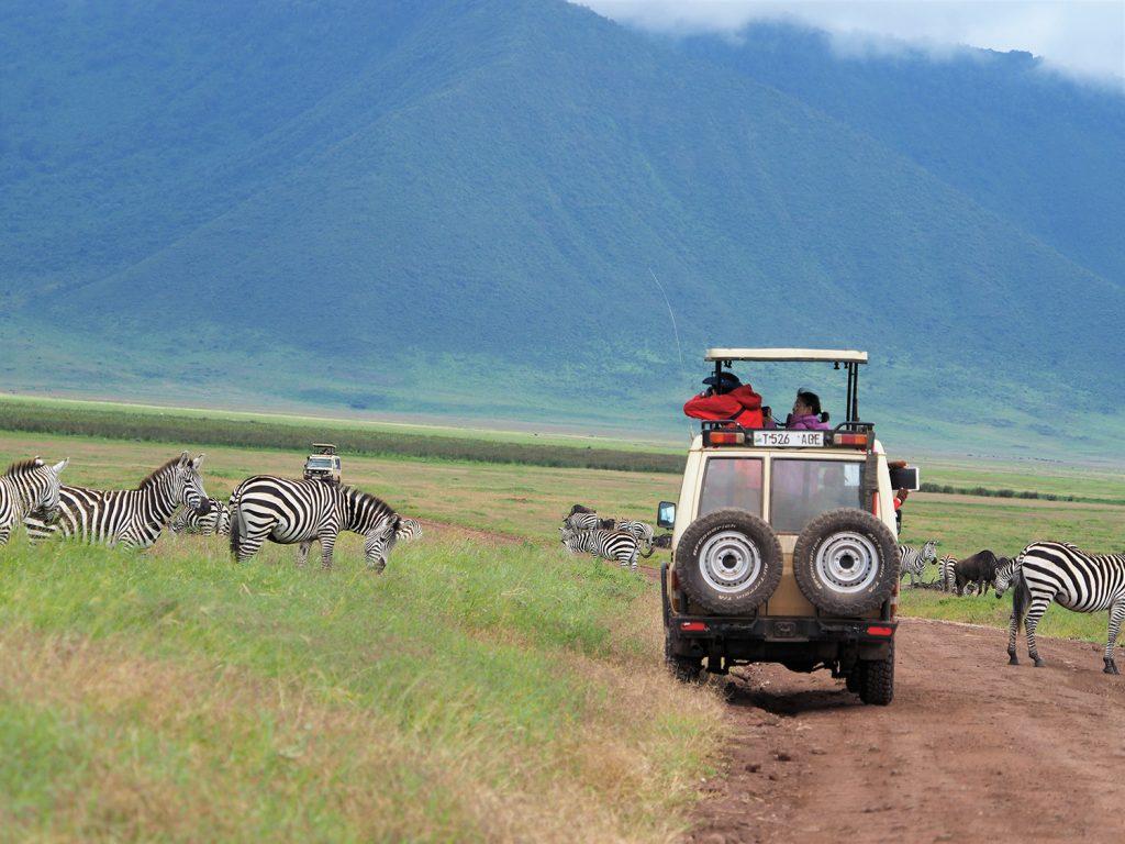 高低差500mの崖を駆け降りてクレーターの中をドライブ。動物達ものんびりしていて、とても距離が近いのがンゴロンゴロの特徴です。