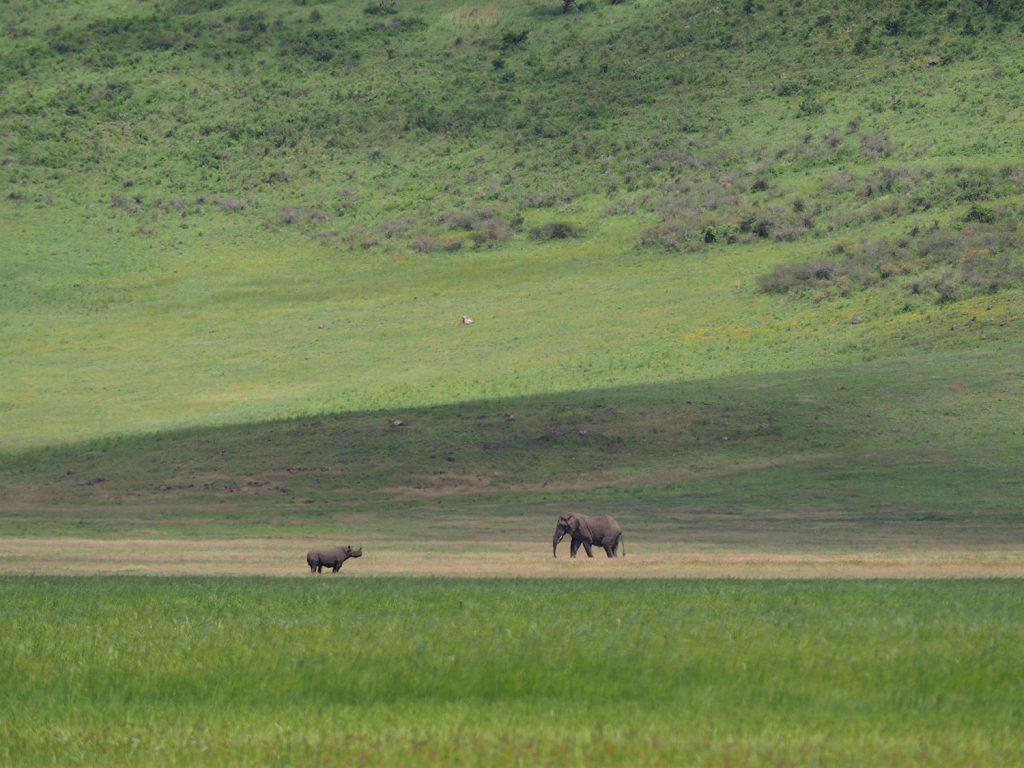 遠くの方にクロサイが見えました。ここでは最年長57歳!の雌のサイが保護されています。