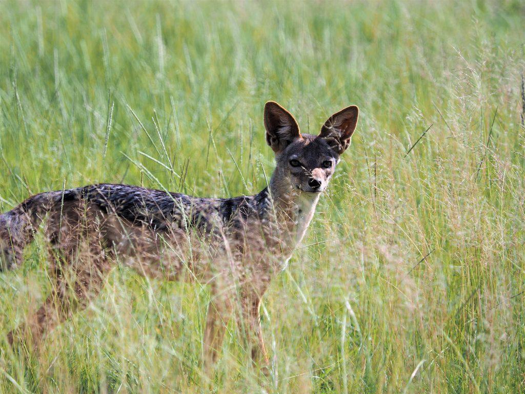 小型の動物はやっぱり姿がすぐに隠れてしまいます。