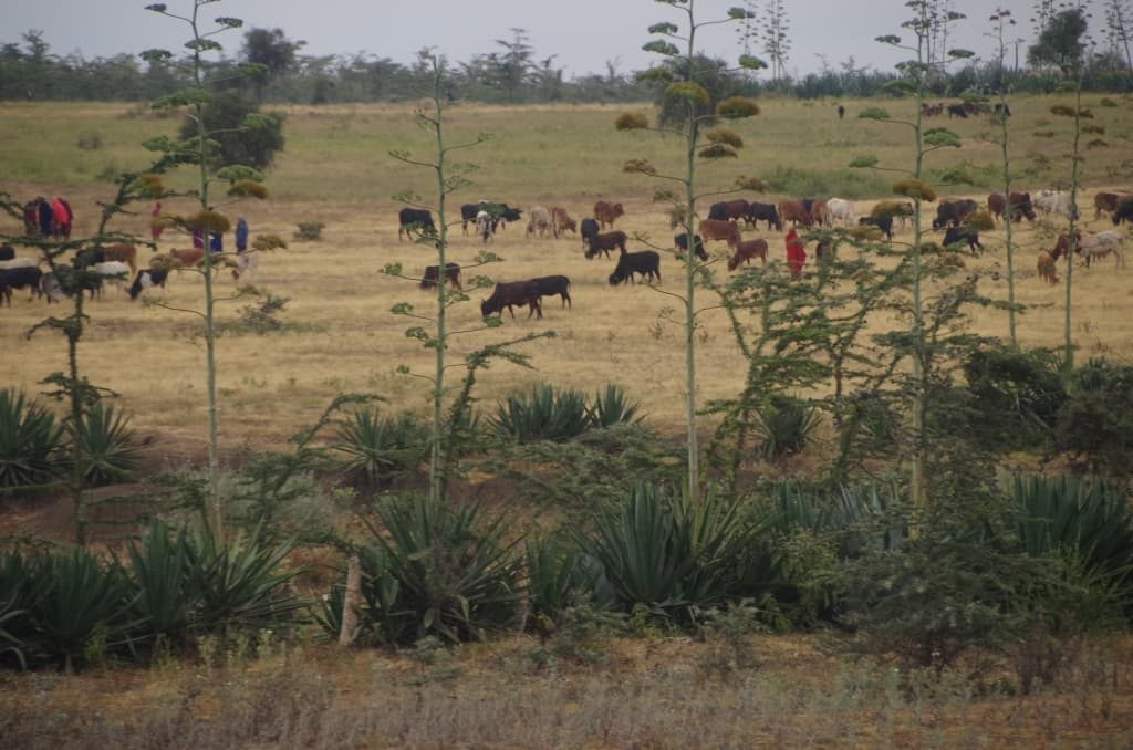 窓から。放牧されている牛などを見ると着いたことを実感。
