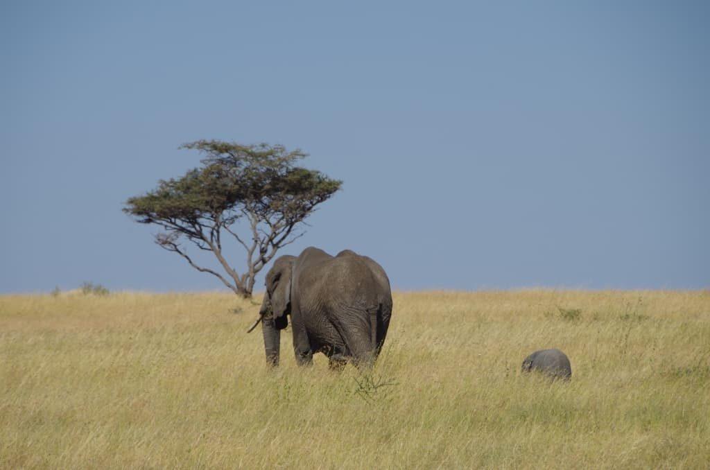 小象がかわいい…。