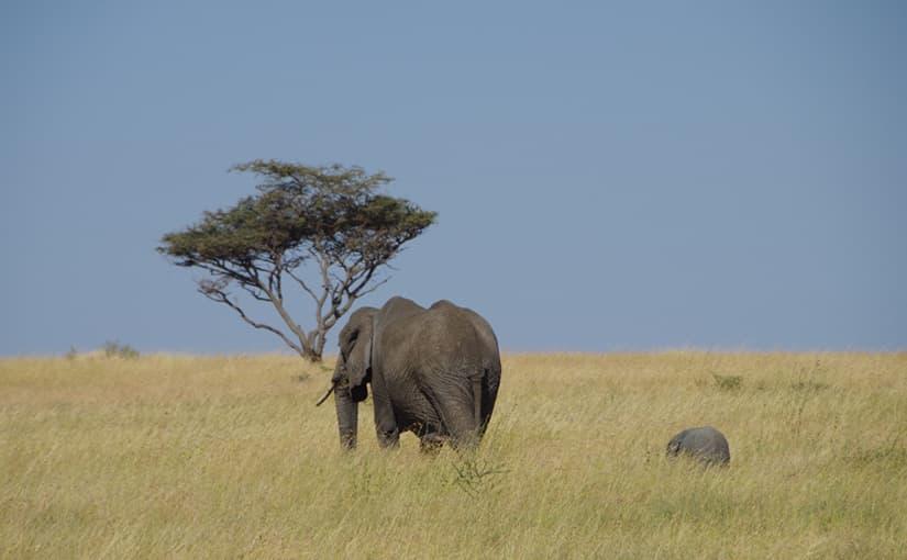 タンザニア旅行レポート