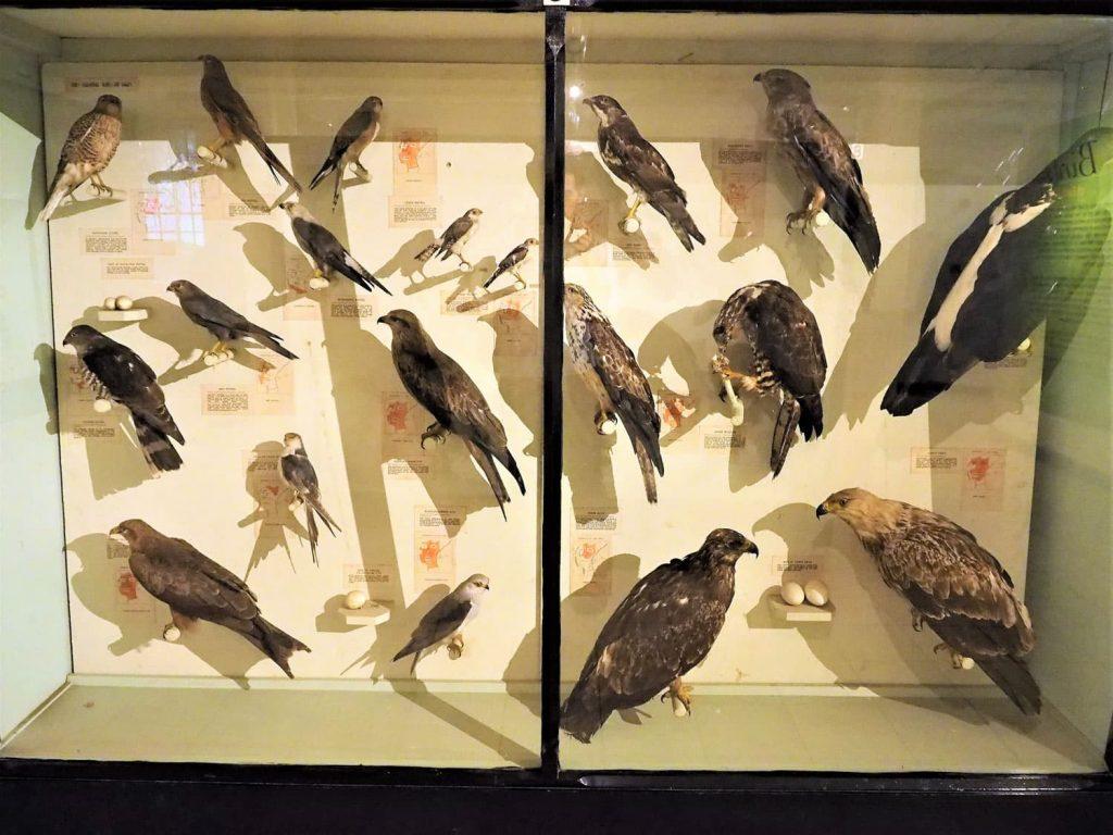 500種類を超える(!)鳥類の剥製コーナーは見ごたえ満点です。