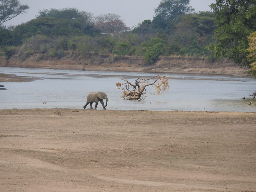 遠くでゾウが川を渡っていました。