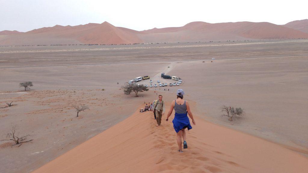 世界最古の砂漠ナミブ砂漠の砂丘