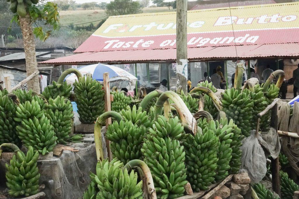 ウガンダの主食といえばマトケ。甘くないバナナです。