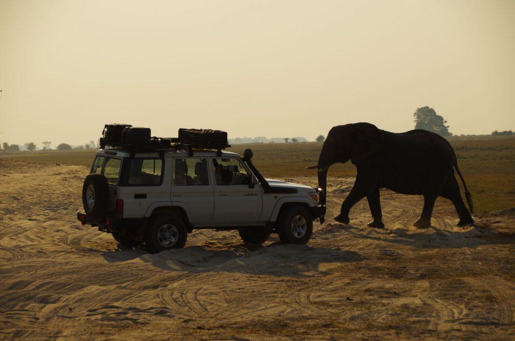 象は毎日たくさん見ることが出来ました。こんなに近いことが何度もありました!