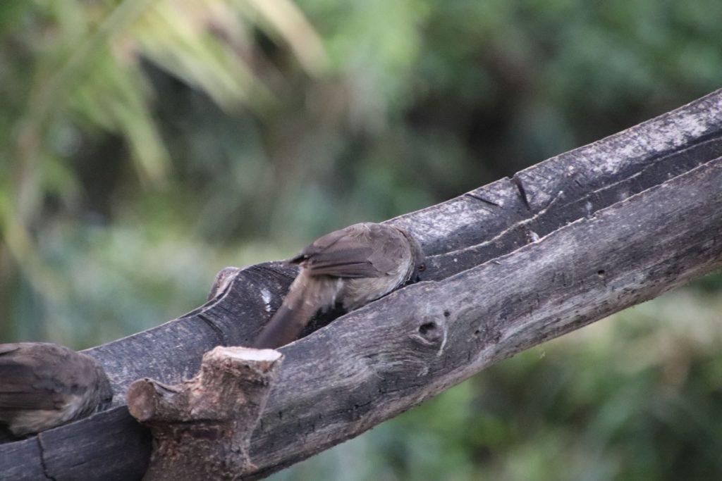 何やら熱心に木をつつく小鳥