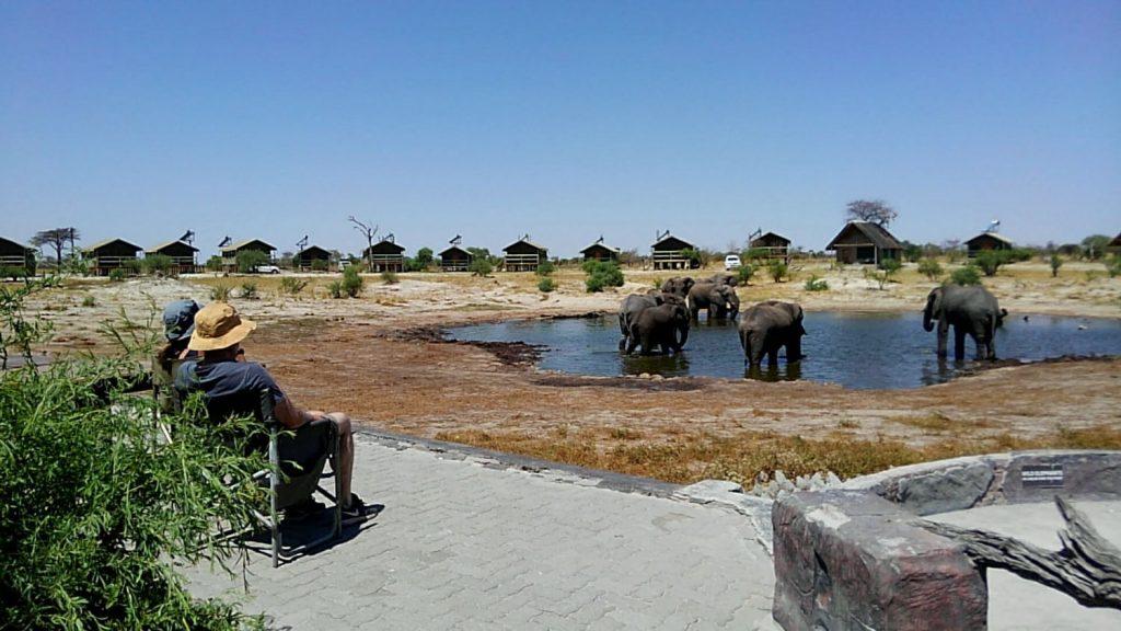 キャンプ場の水場にひっきりなしにやってくるゾウ