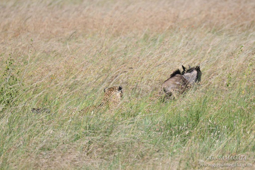 ヌーの子に襲いかかるヒョウ