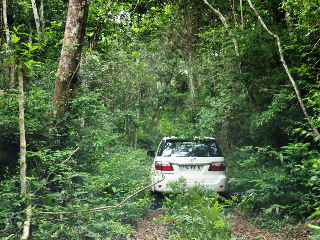 森深くに入ってみますが、やはりそう簡単にチンパンジーには出会えず。