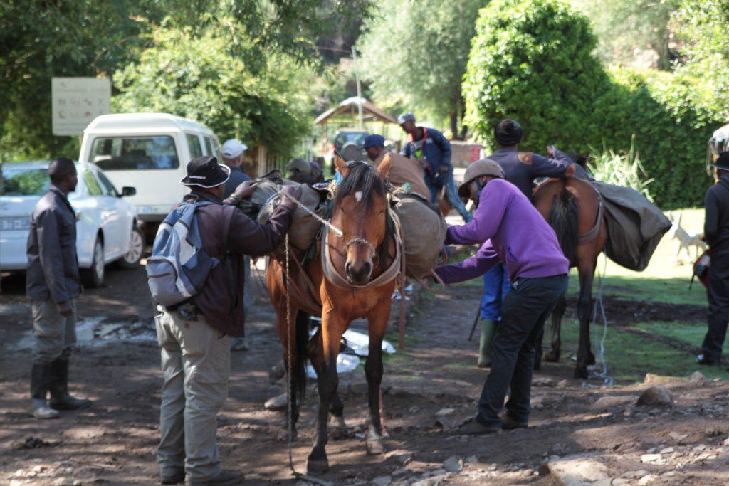2泊3日のトレッキングに必要な荷物などを荷馬にパッキング