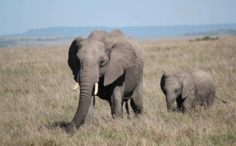 ケニア家族旅行