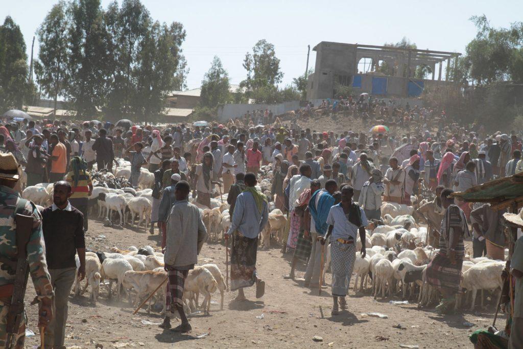 熱気で溢れている家畜市