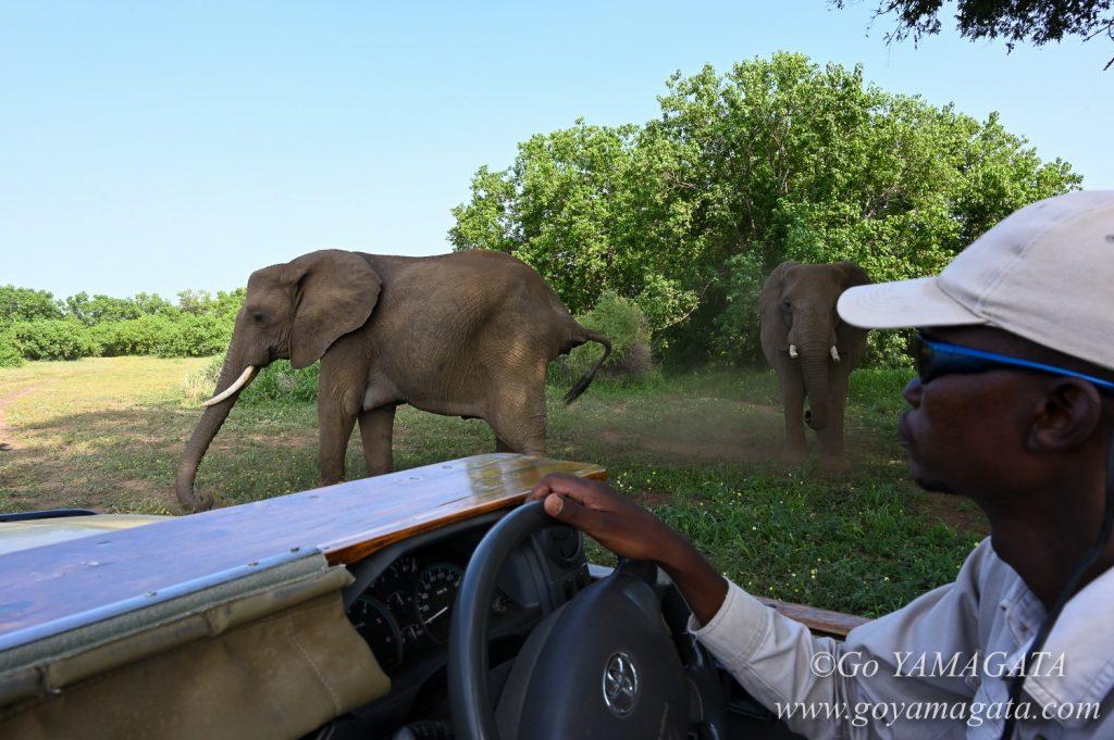 マシャトゥではオープンカーで動物たちを間近から撮影できる