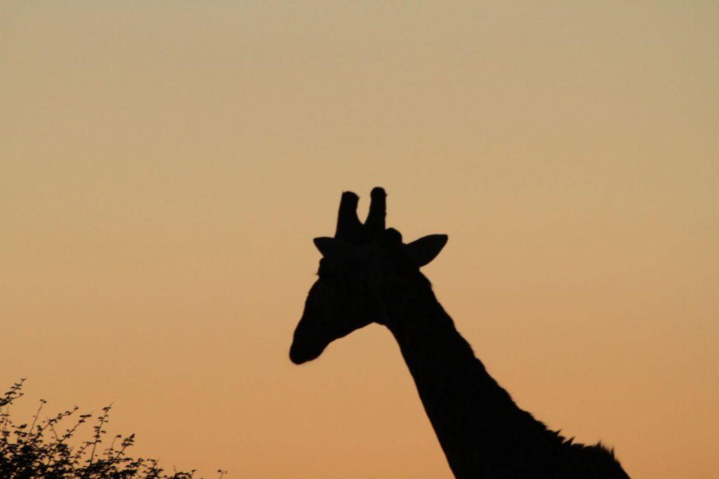 動物たちも綺麗な色に染まります4