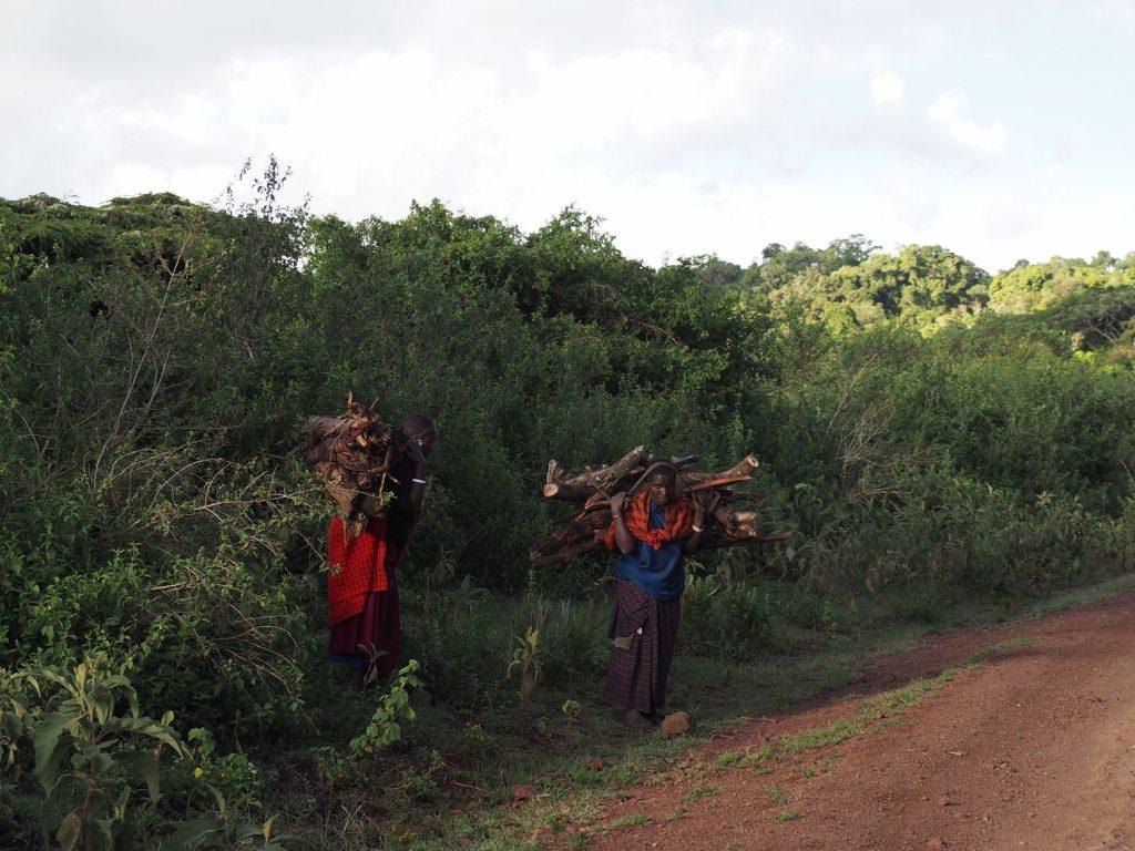 マサイの人々の大切な燃料・牧を運ぶ女性たち。