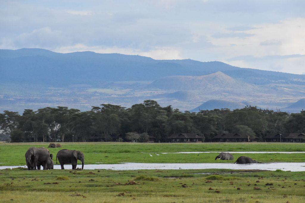 インパラやゾウなどを見学しながら進んでいくと...。(因みにゾウの向こうに見えるのが今回宿泊したオルトカイロッジです。)