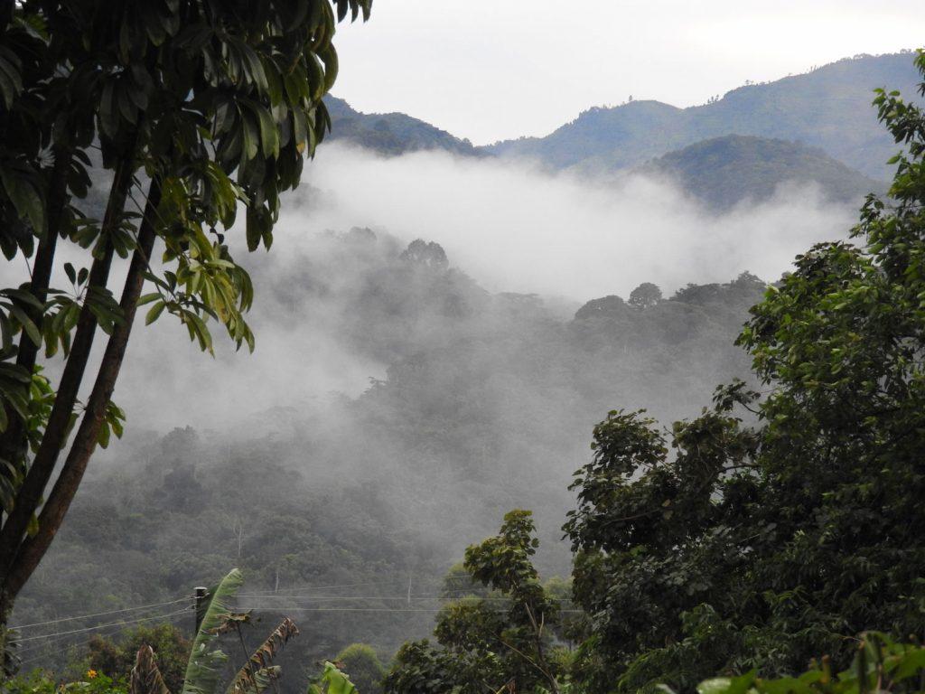 ロッジからの眺めです。時々霧がかかります。