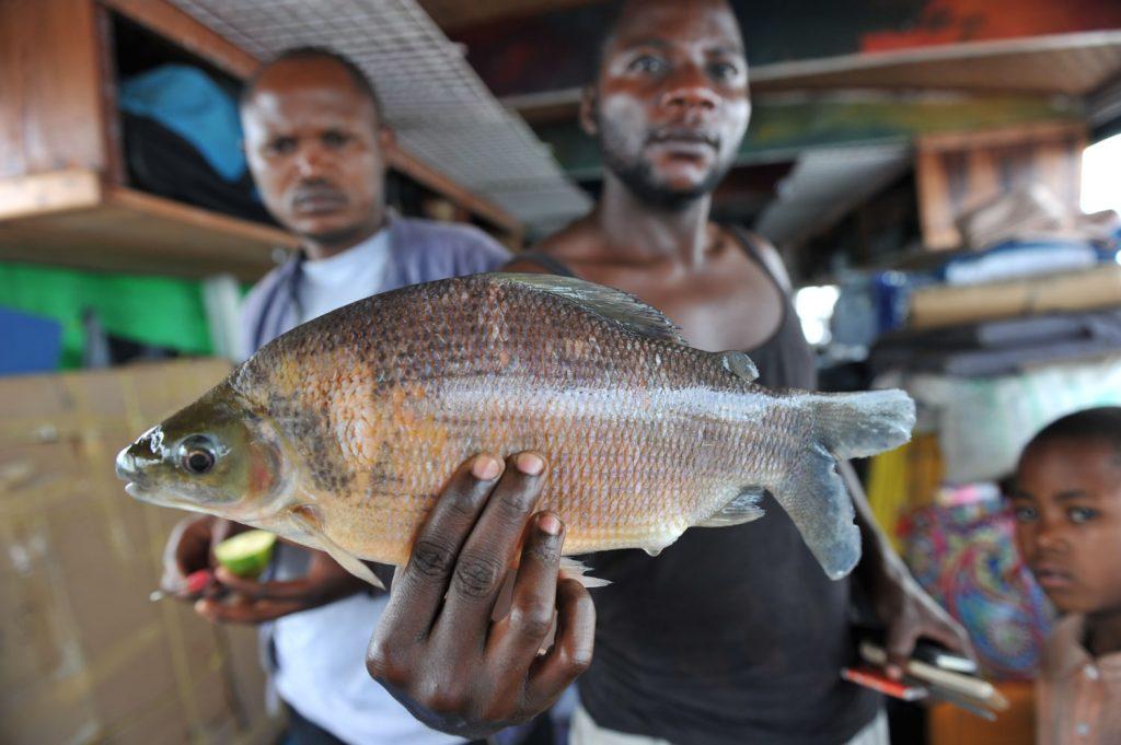 コンゴ川の新鮮な魚。ボトという鯉のような魚や肺魚が一番の美味!?